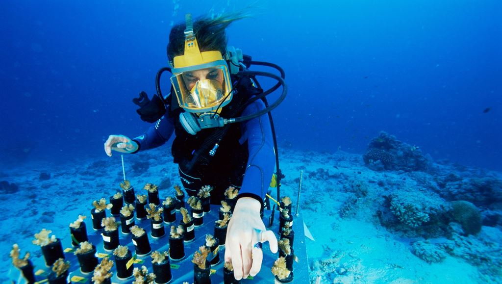 Scientist diving under water working on coral bleaching